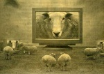 sheep20on20tv